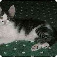 Adopt A Pet :: Ralph and Sara - Portland, OR
