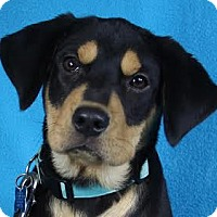 Adopt A Pet :: Charmer - Minneapolis, MN