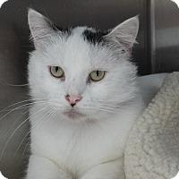 Adopt A Pet :: Big Boy - Elyria, OH