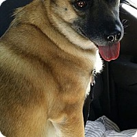 Labrador Retriever/Chow Chow Mix Dog for adoption in Valley Park, Missouri - Maxine