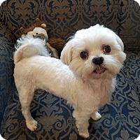 Adopt A Pet :: BEIJOL - New Windsor, NY