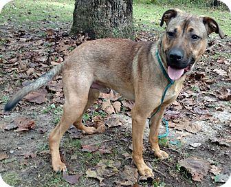 Shepherd (Unknown Type) Mix Dog for adoption in Capon Bridge, West Virginia - Kurtis