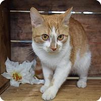 Adopt A Pet :: Peanut - Germantown, MD