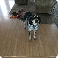 Adopt A Pet :: Ruger - Meridian, ID