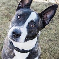 Adopt A Pet :: Nakita - Lockport, NY