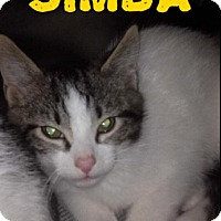 Adopt A Pet :: Simba - Northfield, OH