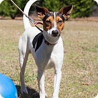 Adopt A Pet :: Manning - Conyers, GA
