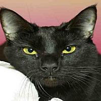 Adopt A Pet :: PANTHER - Alameda, CA