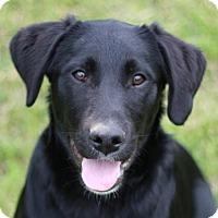 Adopt A Pet :: Jack - ADOPTION IN PROGRESS - Brattleboro, VT