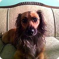 Adopt A Pet :: Toby - Hamilton, ON