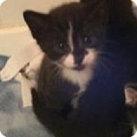 Adopt A Pet :: Jasper - Pittstown, NJ