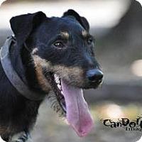 Adopt A Pet :: Po in Bryan - Austin, TX