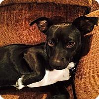 Adopt A Pet :: Ernie - Garwood, NJ