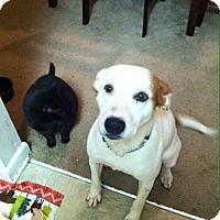 Adopt A Pet :: Mia - Greenville, SC