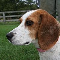 Adopt A Pet :: Lyla Garrett - Waldorf, MD
