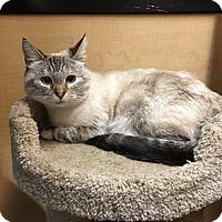 Adopt A Pet :: Little white - Riverside, CA