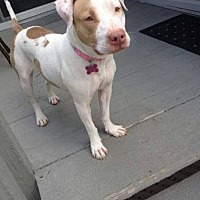 Adopt A Pet :: Barbie - East Rockaway, NY