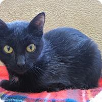 Adopt A Pet :: jenny - Gaylord, MI