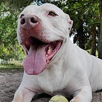 Adopt A Pet :: Orlando - Sarasota, FL