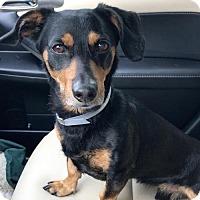 Adopt A Pet :: Vesper - Weston, FL