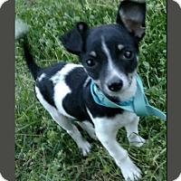 Adopt A Pet :: Bruno - Wakefield, RI