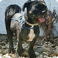 Adopt A Pet :: Jasper - Oswego, IL