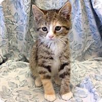 Adopt A Pet :: Carol - Larned, KS