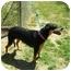 Photo 3 - Doberman Pinscher/Labrador Retriever Mix Dog for adoption in Santee, California - Layla