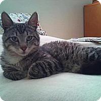 Adopt A Pet :: Bear - Modesto, CA