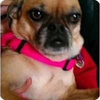 Adopt A Pet :: Lady Bug - Phoenix, AZ