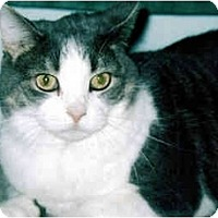 Adopt A Pet :: Keisha - Medway, MA