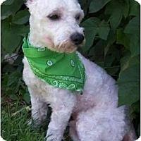 Adopt A Pet :: Vincent Van Gogh - La Costa, CA