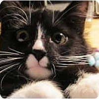 Adopt A Pet :: Peyton - Warren, MI