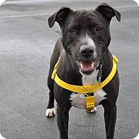 Adopt A Pet :: Loretta - Shrewsbury, NJ