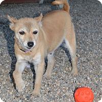Adopt A Pet :: Gayle - Prole, IA