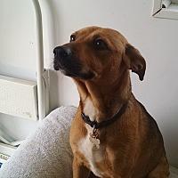 Adopt A Pet :: Spirit - Gallatin, TN