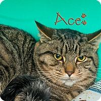 Adopt A Pet :: Ace - Somerset, PA