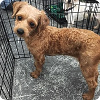 Adopt A Pet :: ETHYL - Sherman Oaks, CA