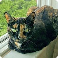 Adopt A Pet :: Kaya - Troy, MI