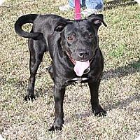 Adopt A Pet :: Diana - Sylvania, GA