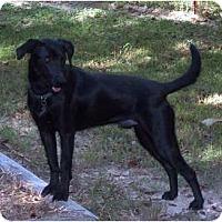 Adopt A Pet :: Rocky - Centerville, TN