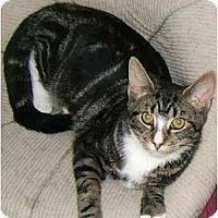 Adopt A Pet :: Tabitha the lovingTabby! - New York, NY