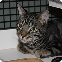Adopt A Pet :: Badger (LE) - Little Falls, NJ