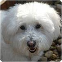 Adopt A Pet :: Colby - Beachwood, OH