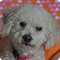 Adopt A Pet :: Lulu - La Costa, CA