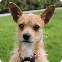 Adopt A Pet :: Ryder - Mission Viejo, CA