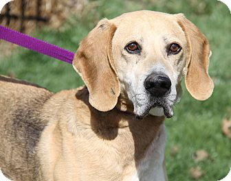 Hound (Unknown Type) Mix Dog for adoption in Marietta, Ohio - Chester (Neutered)-Update