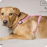 Adopt A Pet :: April - Phoenix, AZ