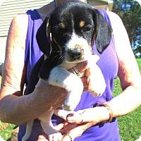 Adopt A Pet :: SLICK - Brookside, NJ