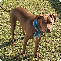 Adopt A Pet :: Dobby - Ft. Myers, FL